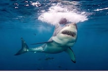 Surfing Instructor Was Alerting Students on Shark Attacks. Moments Later He Faced The Same