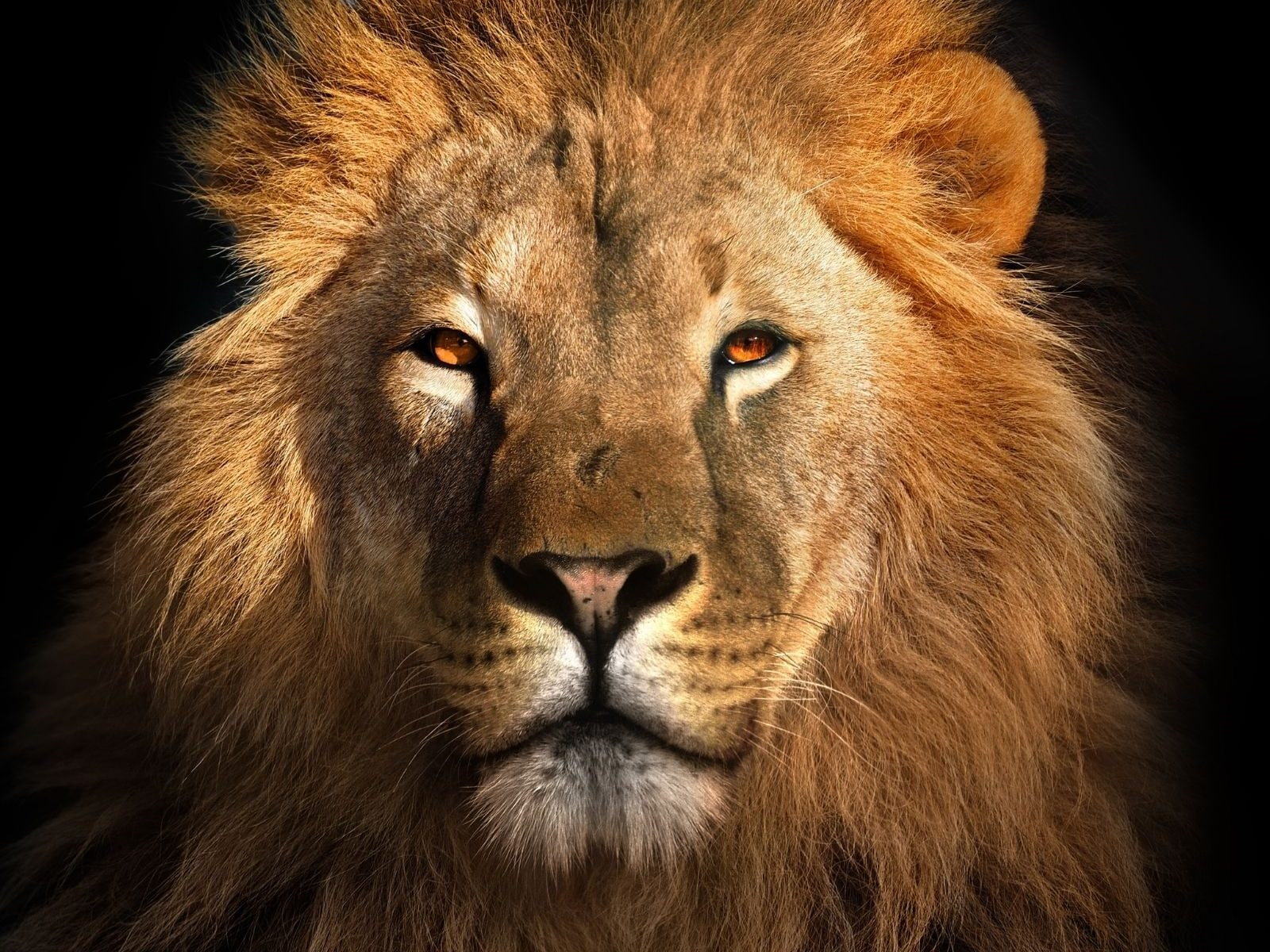 World Lion Day 20 History and Significance