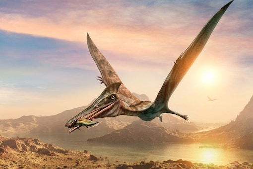 New Fossil of a Flying Reptile 'Thapunngaka shawi' has been Found in Australia