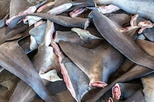 UK to Ban Import and Export of Shark Fins in Efforts for Marine Conservation