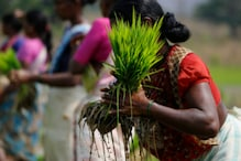 Nudge Spending, Helping Farmers: MNREGS Can Be Rural Economy Booster in Pandemic