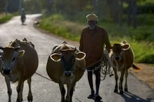 Over 50% Agricultural Families in Debt with Average Loan of Rs 74,121 in 2019: Survey