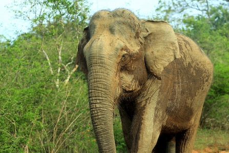 Elephant Aged 18 Dies Due to Electrocution in Assam