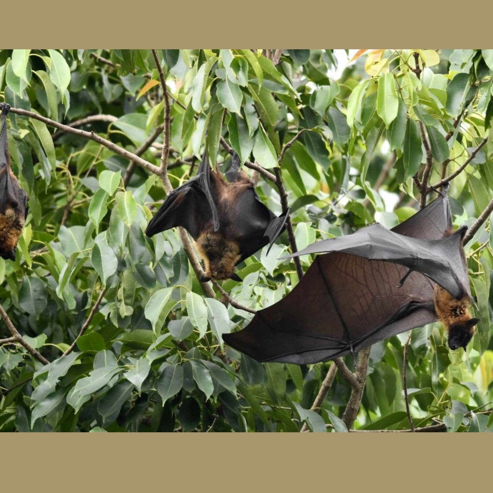 Nipah Virus in Kerala: 11 Contacts of Victim Symptomatic; Govt Zeroing in On 'Source'