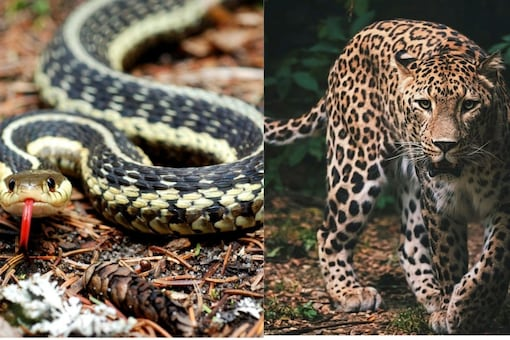 The short news snippet talks about an ill-fated snake that reportedly got stuck inside a car and rescue attempts by forest division officials were of no avail. (Image for representation)