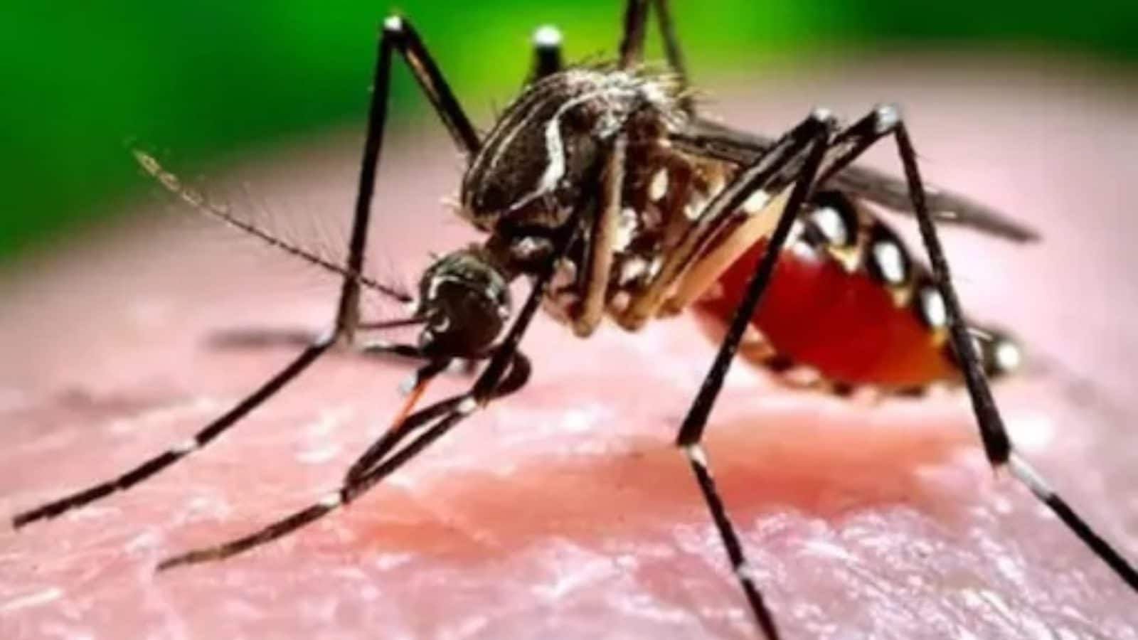 Youth Dies Due to Dengue in Kolkata, Panic Spreads