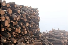 Demand for Wood in Crematoriums Causes Widespread Tree Felling in Uttarakhand