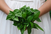 Here's How You Can Chop Herbs Like a Master Chef, See Video
