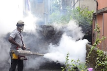 Dengue Cases on Rise: Here's How You Can Protect Yourself