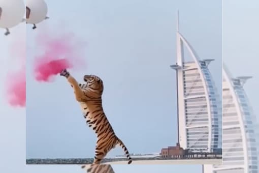 A video of the event has triggered outrage online as many condemned the use of the wild cat. (Credits: Instagram)