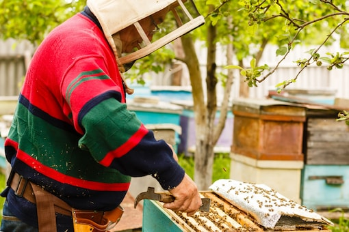 For the beekeepers, the annual pilgrimage is crucial to their survival. (Image Credits: Shutterstock/Representative)