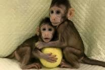 In Pictures: 20 Cloned Animals Through the Years