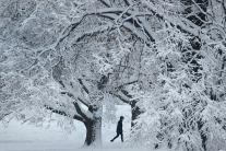 Winter Storm Brings Heavy Snow, Ice and Freezing Rain in US