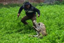 PHOTOS| Leopard Attacks People in Punjab's Jalandhar