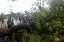 Gusty Wind, Hailstorm Hit Parts of Gujarat; 1 Die as Uprooted Tree Falls on Her