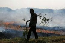 Budget 2018: Subsidy Won't Stop Crop Burning, Purging Paddy Might