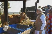 Budget 2019: Modi Govt to Set up National Cow Commission, RSS Adds 'Desi' Angle to It