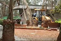 400-year-old Banyan Tree Under Threat as K'taka Govt Plans Walkway Around it