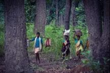 'Unrealistic and Ecologically Unsound': Can the Forest Rights Act Overrun Forest Land?