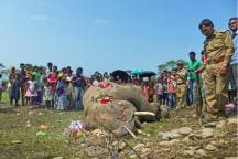How Elephants and a Fence Along Nepal Border Dominate Election Chatter in North Bengal