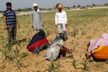 When Netas' Schemes End up as Mere Poll Sops, Vexed Farmers Find Hope in Organic Farming