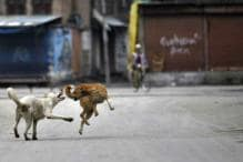 Drones, Night Vision Tech to Keep a Check on Child Killer Dogs of UP's Sitapur