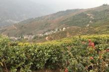 Bengal's Tea Gardens Brewing Trouble