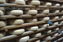 In Spanish Catalonia, A Cheese Maker's Touch Is The Magic