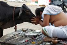 Desi Cow — A One Stop Solution To All Problems: RSS Thinks So