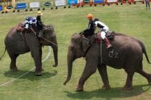 In Pictures: Bangkok's Elephant Polo Tournament 2018
