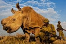 Watch: How the World's Last Male White Rhino Was Being Protected 24*7