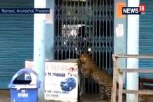 Leopard Enters City Market in Arunachal Pradesh