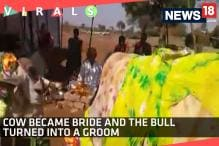 Watch: When a Cow Became Bride and The Bull Turned Into A Groom