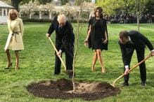 Donald Trump and Emmanuel Macron Planted a Tree. But Where Did it Go?