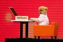 Celebrity Dog Garners Attention at FB's Annual Conference