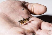 Researchers Including 3 Indians Build World's First Wireless Insect-Sized Drone in US