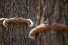 Centre, AAP in Twitter War Over Felling of Trees in South Delhi