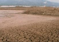 Deforestation cause of global warming: Experts