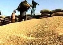 India globalised: How NY speculator impacts farmer