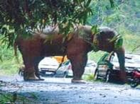 Tusker runs amok on Abhi-Ash's film set in Kerala