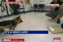 Dogs are good judges of character: Study