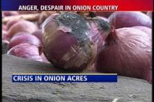Onion farmers in Nashik face hard times