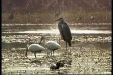 Centre acts on wetland sale by UP government