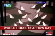 Gujarat woman works to save vanishing sparrows