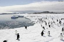 15 distinct regions identified in Antarctica