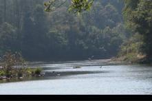 Govt policies destroying Western Ghats: Ecologist