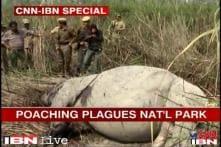 Assam: Kaziranga faces crisis as 17 rhinos killed in 4 months