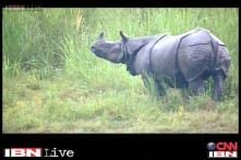 30 Minutes: Saving our rhinos