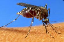 Odisha: Dengue hits 26 out of 30 districts, nearly 3,500 people test positive