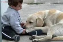 Watch: How a dog befriends a reluctant little boy with Down Syndrome